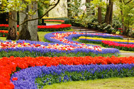 keukenhof the largest flower show in the world near amsterdam