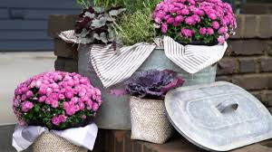 container gardening ideas pictures u0026 videos hgtv