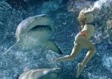 swim sharks calculator fuse cfo