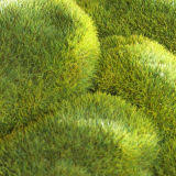 Moss Bath Rug Downstairs Toilet Ideas 8 Best Ways To Transform Your