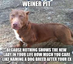 Dog Lady Meme - image tagged in weiner pit dogs funny national pet day imgflip