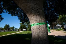 city of omaha will begin treating ash trees with insecticide to