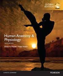 Learning Anatomy And Physiology Free Online Pearson Human Anatomy U0026 Physiology Global Edition 10 E