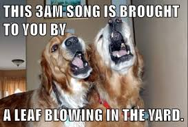 Dog Barking Meme - we heard a noise outside i has a hotdog dog pictures funny