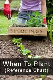 89 best gardening images on pinterest