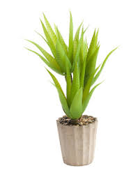 Fake Plants Home Artificial Plants T J Maxx