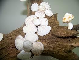natural seashell flower u0026 driftwood sculpture nautical beach