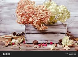 Drying Flowers In Books - vintage decorative composition with dry flowers of hydrangea in