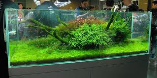 Most Beautiful Aquascapes Nature Aquariums And Aquascaping Inspiration