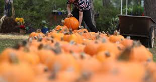 Central Point Pumpkin Patch Oregon by Seven Tips For Finding The Best Pumpkins At The Patch