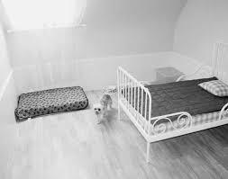 chambre pour chien stunning chambre pour chien id es de design bureau and