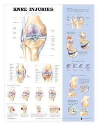Knees Anatomy Shop For Human Knee Anatomy Models U0026 Charts Anatomy Of The Knee