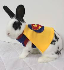 in costumes 59 costumes for pet bunnies 24 animals that aren 039 t dogs in