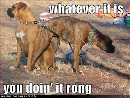 boxer dog funny boxer dogs funny quotes quotesgram animal pics pinterest