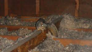 Squirrel In Basement by There Is A Squirrel In The Attic