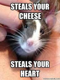 Rat Meme - rat meme a mischief of rats pinterest rats meme and animal