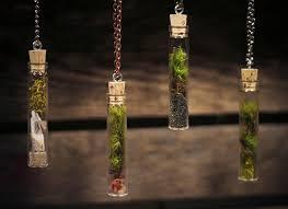 pixie cup lichen and moss inhabitat u2013 green design innovation