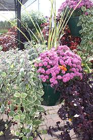 seasonal annual flowers waldoch farm garden center lino lakes mn