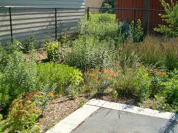 native plants in landscape management 6 backyard flooding solutions for landscaping a storm proof yard