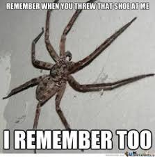 Cute Spider Meme - 22 best spider memes images on pinterest ha ha funny stuff and