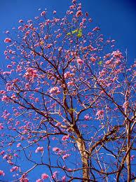 Hidden Canopy Treehouse Monteverde by Roble Sabana Lepanto Puntarenas árboles Pinterest Puntarenas