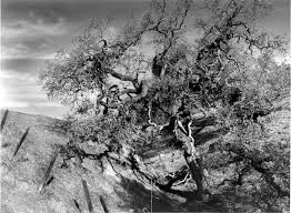 tim burton tree arthur dot com black and white