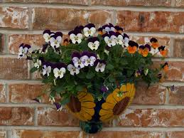 time to plant pansies east texas gardening