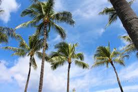 thanksgiving honolulu honolulu hawaii vibes gallery gastrofork vancouver food and