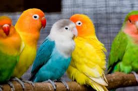 beautiful images of parrots wallpaper