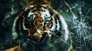 tiger broken screen wallpaper 2017 live wallpaper hd