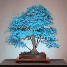 baum fã r balkon best 25 maple tree seeds ideas on forest crafts seed