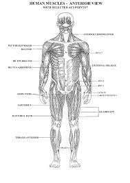 topic simple archives human anatomy educations