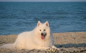 belgian shepherd kijiji the 52 trendiest dog breeds pets pantagraph com