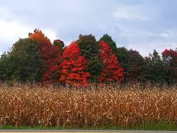 56 northeast ohio fall foliage images ohio