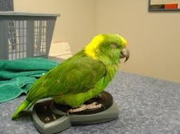 vital l full spectrum light for birds birds health guide little critters veterinary hospital gilbert az