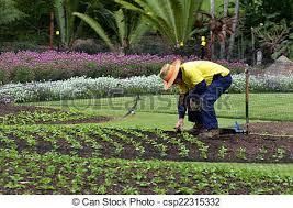 City Botanic Gardens Brisbane Aus Sep 24 2014 Gardner Planting Plants At Stock