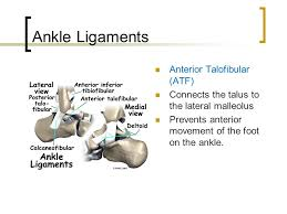 Talus Ligaments Foot And Ankle Injuries Ppt Video Online Download