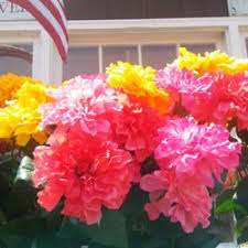 flower fruit merino s flowers fruit baskets 22 photos florists 420