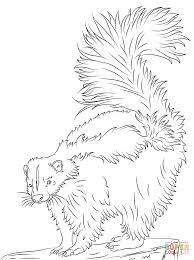 cute skunk coloring page free printable coloring pages