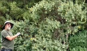 native plants in southern california blog u2013 back to natives restoration
