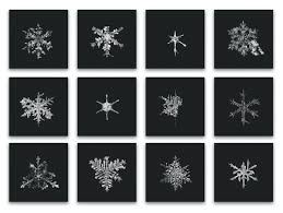 snowflake wilson bentley crystal bliss what the snow photos of doug mike starn teach us
