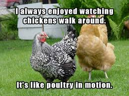 Rooster Jokes Meme - you won t be able to stop yourself from laughing at these corny dad