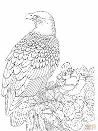 bald eagle coloring pages pinterest bald eagle and craft