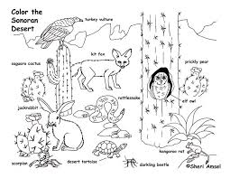 desert owl coloring page desert plant coloring pages animal coloring pages pinterest