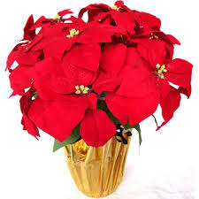 christmas plants home accents 21 in silk poinsettia arrangement of 6