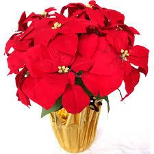 christmas plants u0026 flowers indoor christmas decorations the