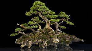 world u0027s most amazing bonsai trees youtube