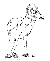 rams horn trumpet animal coloring pages goat ram coloring page and kids