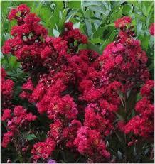 gardening blog family tree atlanta ga