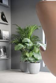 best 25 interior plants ideas on house plants plant